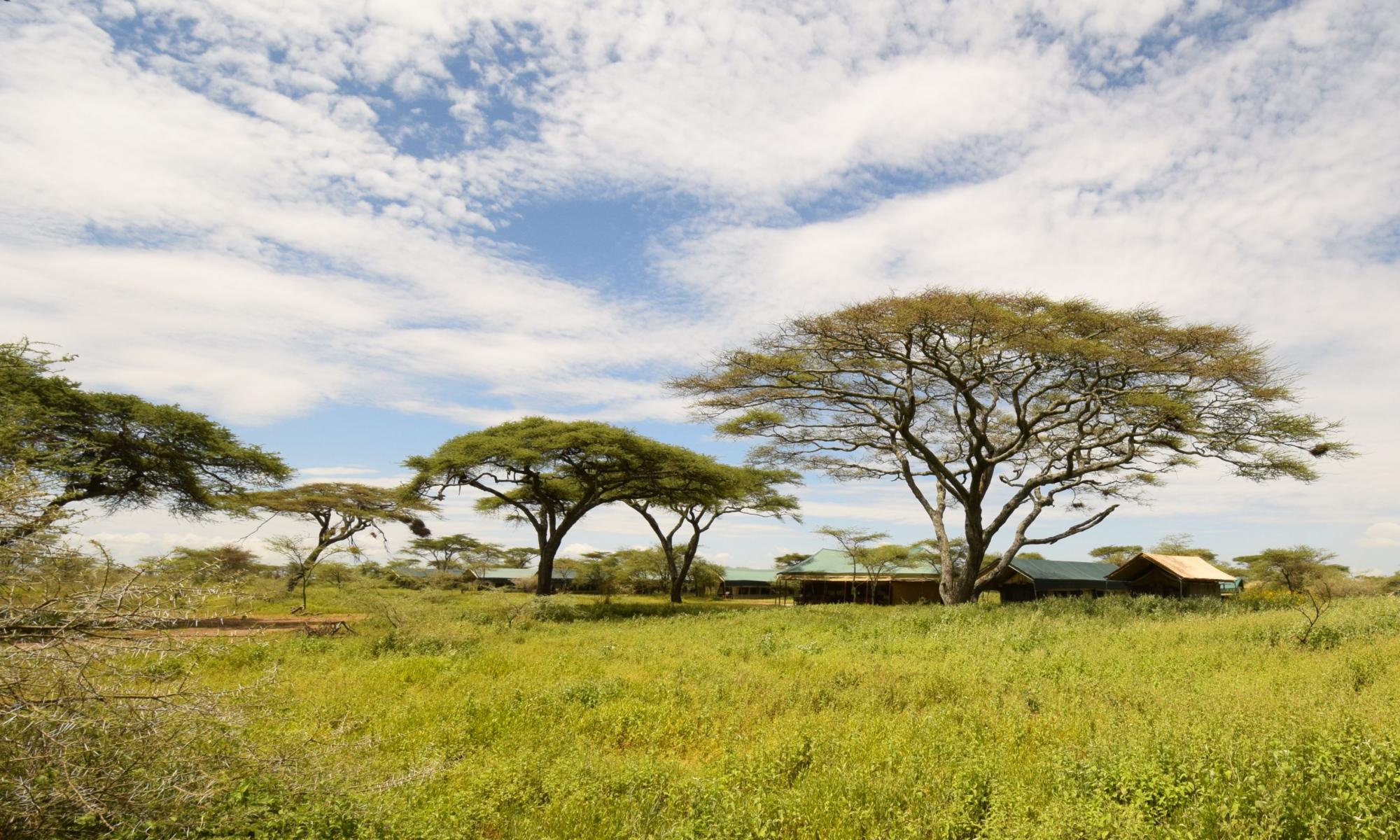 Tented camp Serengeti
